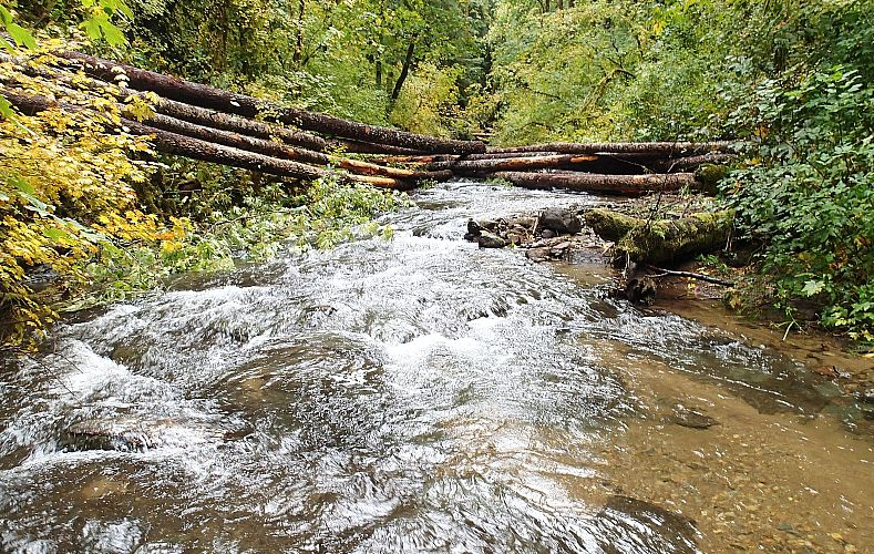 From Forest to Faucet: Upper Rickreall Creek Watershed Enhancement